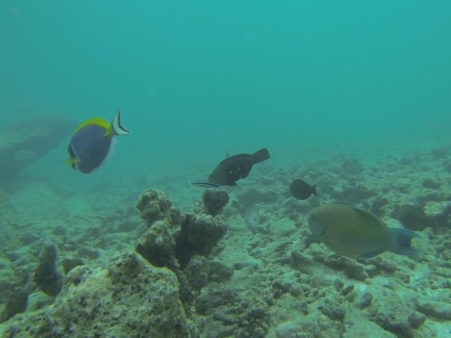 Quelques poissons tropicaux du côté de Félicité