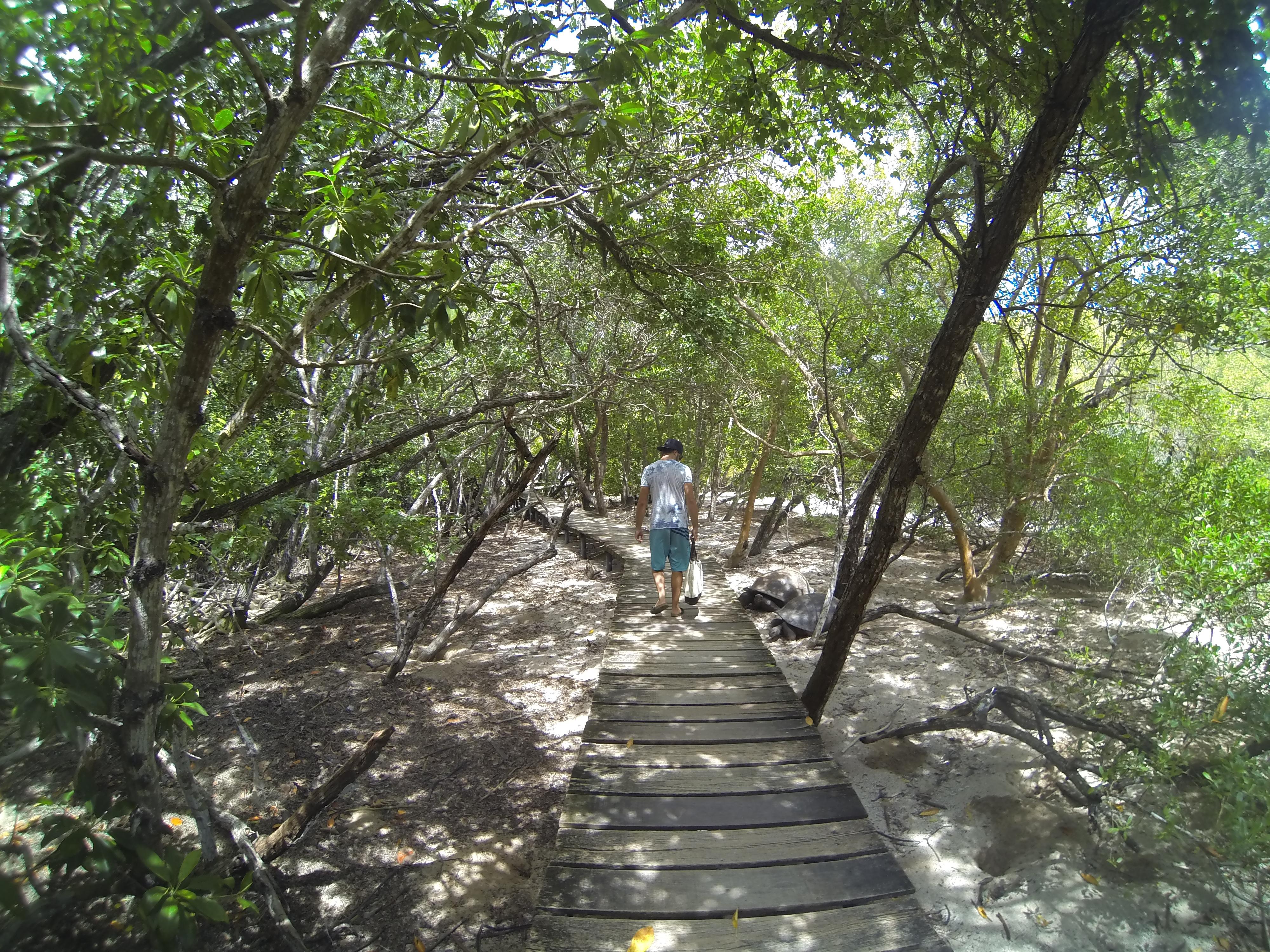Le chemin qui serpente dans la mangrove de Curieuse Island