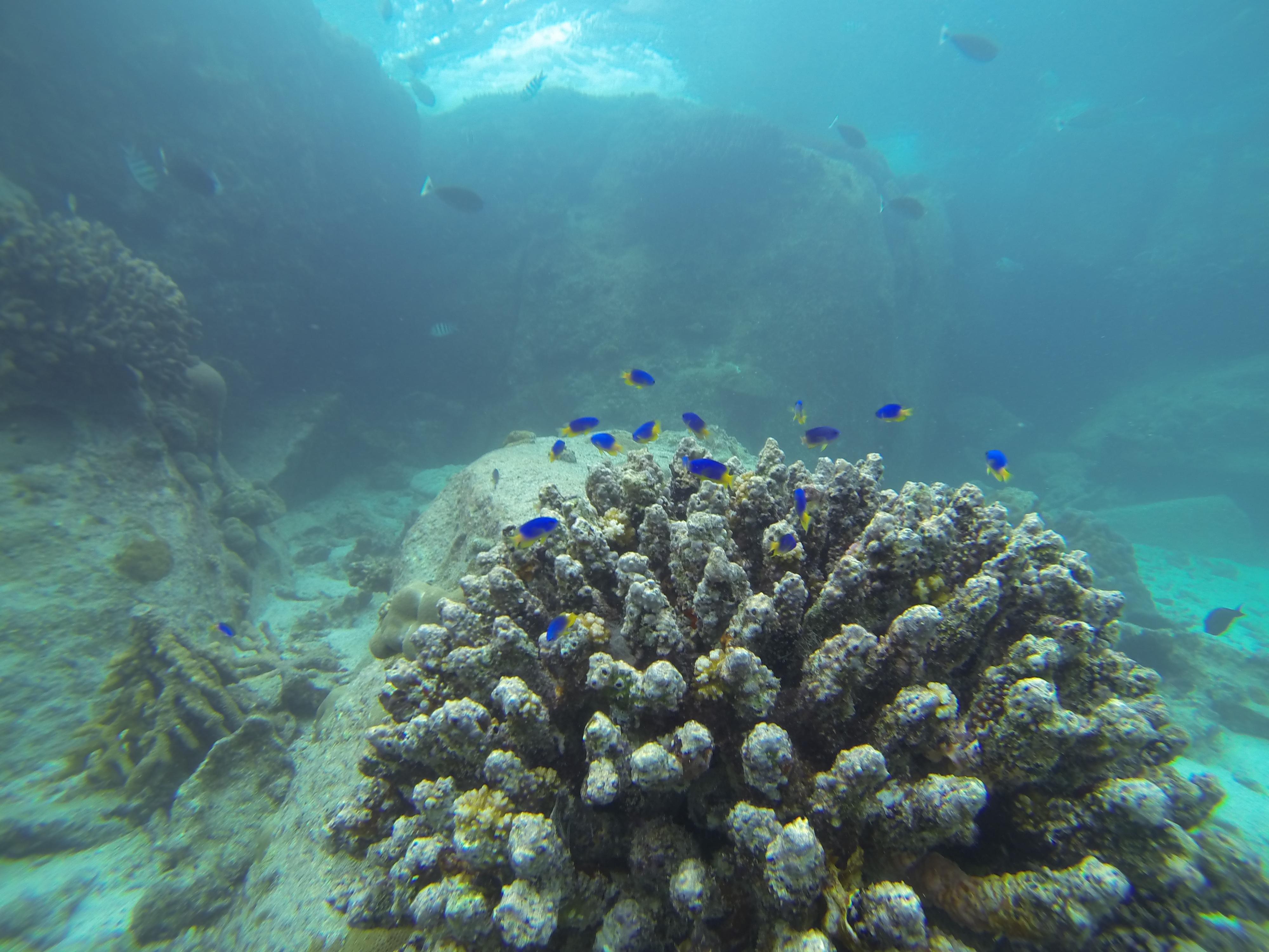 Petit récif de corail à l'île Saint Pierre
